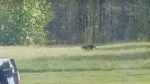 Une créature énorme a été vue en train de rôder à côté d'un restaurant dans le Mississipi – La vidéo est devenue virale, alors les gens comprennent ce que c'est