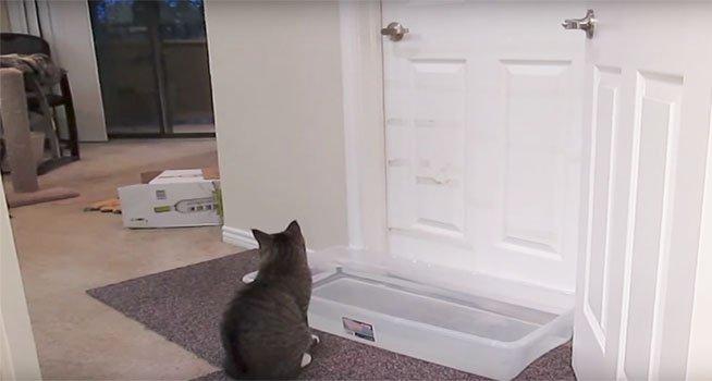 Il a mis au point un plan parfait pour emp cher son - Comment empecher un chat de gratter a la porte ...