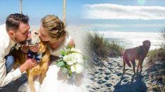 La mariée «invite» son chien en fin de vie à présenter les anneaux du mariage et lui offre le voyage de sa vie