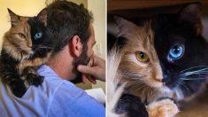 15 photos hypnotisantes de ce félin phénoménal au visage parfaitement divisé – la #12 est rigolotte