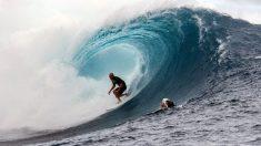 Un surfeur échappe à un requin avec un mouvement qu'il a appris sur YouTube