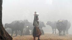 Pollution au Pakistan : malgré un léger mieux, il faut