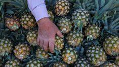 Ce cuir végétal à base de fibres d'ananas pourrait révolutionner l'industrie textile et sauver la vie de milliers d'animaux
