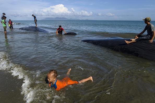 Neuf grands cachalots échoués sur une plage indonésienne