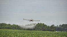 OGM et augmentation du taux d'herbicide dans le corps