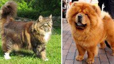 Ces 22 animaux savent qu'ils ont une belle fourrure et en sont fiers