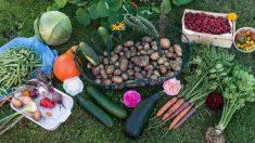 Terre mère, automne et médecine chinoise