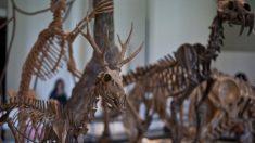 À propos des grandes crises d'extinction