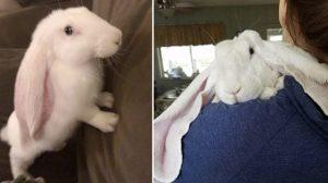 Lucas, le lapin à oreilles tombantes, emmène Instagram dans un tourbillon – son adorable vidéo a été vue 500 000 fois !