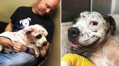 Pooch qui a été utilisé comme appât pour chien et trouvé recouvert de centaines de piqûres, peut enfin sourire