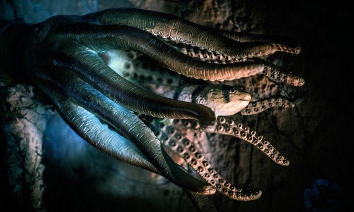 Les fossiles liés au légendaire kraken suffisent-ils à prouver sa terrifiante existence ?