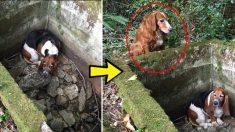 Ce chien mignon et héroïque surveille patiemment son meilleur ami coincé dans le ravin pendant des jours et cherche de l'aide