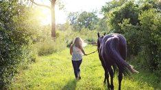 Le cheval, baromètre à émotions