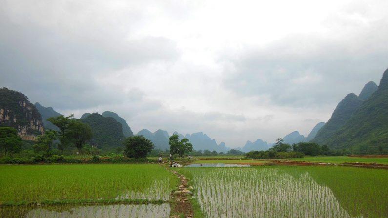 L'histoire d'un paysan chinois non-éduqué qui voulait attaquer un site chimique dévastant sa région