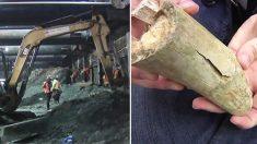 Une équipe découvre un crâne de mammouth datant de l'ère glaciaire lors d'une fouille dans le métro de Los Angeles