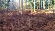 Pouvez-vous trouver le doberman camouflé parmi les fougères? Cette photo a rendu les internautes perplexes!