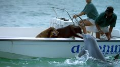 Un dauphin surgit en plein mer pour embrasser un chien qui se trouve sur un bateau