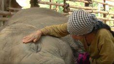 Une femelle éléphant s'endort grâce à la berceuse et aux caresses de sa bienfaitrice