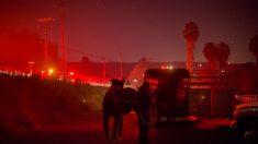 Californie: des chevaux brûlés vifs dans les incendies toujours hors de contrôle