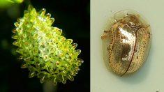 La nature fait décidément bien les choses : 10 insectes dont la beauté va vous émouvoir