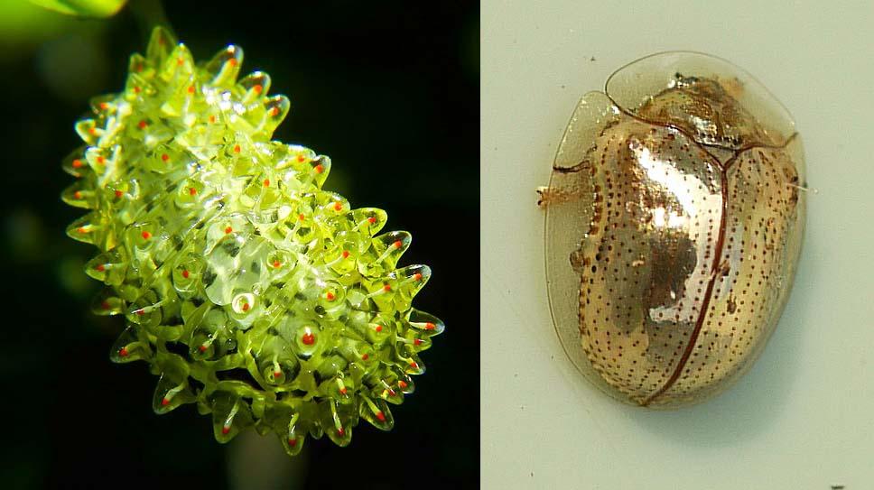 la nature fait d cid ment bien les choses 10 insectes dont la beaut va vous mouvoir epoch. Black Bedroom Furniture Sets. Home Design Ideas