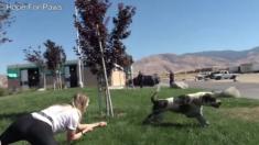 Un gros chien abandonné en pleine chaleur -- quand les secours arrivent, il les traine à terre