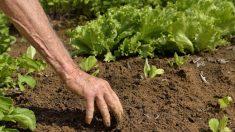 Piéger le carbone dans les sols: où en est l'initiative «4 pour 1 000»?