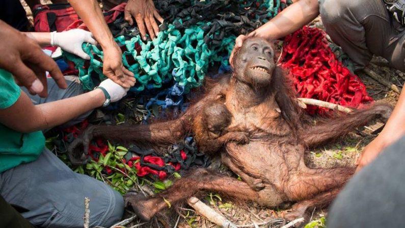 """Résultat de recherche d'images pour """"image de déforestation pour l'huile de palme"""""""