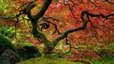 D'après de nouvelles études, les arbres ont une vie sociale incroyable : ils parlent, s'aiment et s'entraident