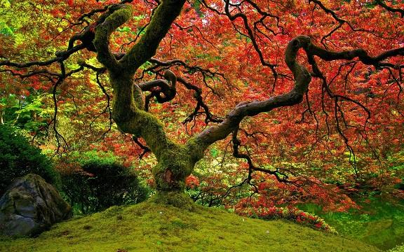 D'après de nouvelles études, les arbres ont une vie sociale incroyable: ils parlent, s'aiment et s'entraident