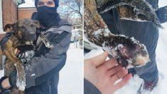 Ils enchaînent leur chien indésirable dehors dans le blizzard – leur voisine inquiète ose un geste audacieux