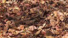 Cette photo a laissé perplexe beaucoup de net-citoyens. Pouvez-vous voir qui se cache à travers ces feuilles ?