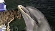 Un chat et des dauphins se font des câlins - ils sont adorables !