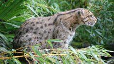 La liste des espèces animales disparues en 2017 dressée par un chercheur américain