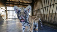 Montpellier : Les cirques avec des animaux pourraient être interdits dès 2019