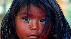 BRÉSIL – Une réserve naturelle au cœur de l'Amazonie sauvée in extremis des griffes des sociétés minières