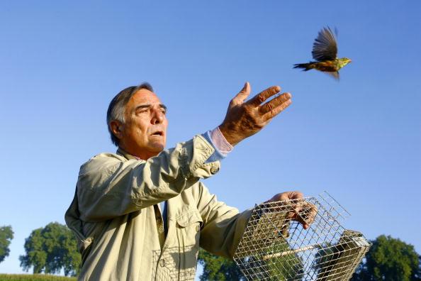 Sud-Ouest: La traditionnelle chasse à l'ortolan devrait bientôt disparaître