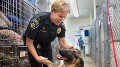 Cette chienne a survécu 1 mois sur le terre-plein d'une autoroute après avoir été jetée d'un véhicule