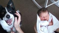 Suite aux réactions de leur chien, un couple découvre que la fièvre de leur bébé est bien plus grave que ce qu'ils pensaient