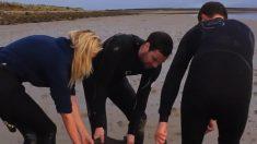 [VIDÉO] - Ils ont transporté des dauphins sur une longueur de plusieurs dizaines de mètres sur la plage