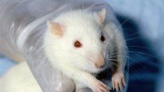 Expérimentation animale, peut-on s'en passer ?