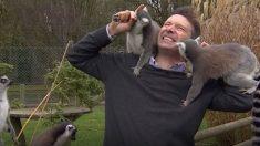 Un journaliste de la BCC filme les informations dans un enclos à lémuriens - qu'est-ce qui pourrait mal tourner ?