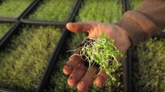 Un projet de micro-ferme en plein Paris pour relier l'homme à la nature