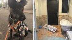 Une Taïwanaise gronde un chien parce qu'il hurle dans la nuit - quelques minutes plus tard, elle se rend compte qu'il lui a sauvé la vie
