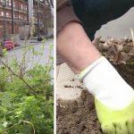 PARIS – Au début du printemps, plus de 50 000 sachets de graines vont être distribuées aux habitants de la capitale