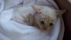Une famille découvre un chaton presque entièrement gelé. Quelques heures plus tard, un miracle se produit