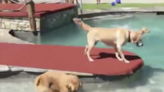 Ces chiens s'amusent comme des fous ! En les voyant au parc, vous comprendrez pourquoi