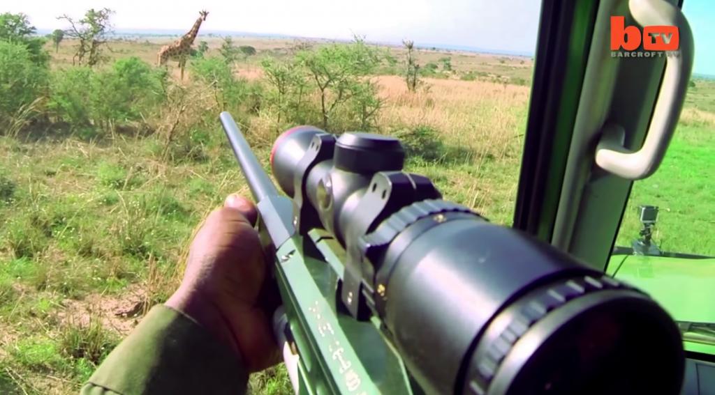 La vid o poignante d une girafe prise dans un pi ge mortel - Comment tuer un arbre sans le couper ...