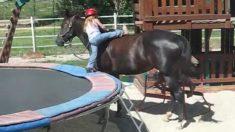 Cette petite fille de trois ans trouve une manière ingénieuse de monter à cheval toute seule