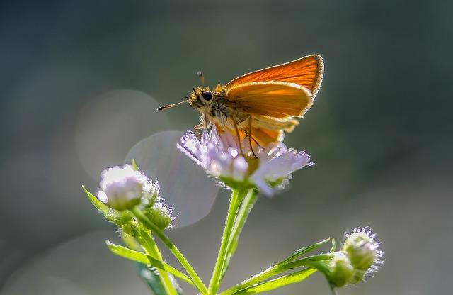 Plus de 75 % des insectes auraient disparu de l'Allemagne depuis 1989, une hécatombe qui pourrait être similaire en France